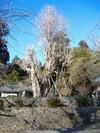 2007_01250027